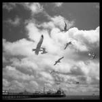 Gulls Over Pier